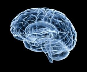 human brain under x-ray